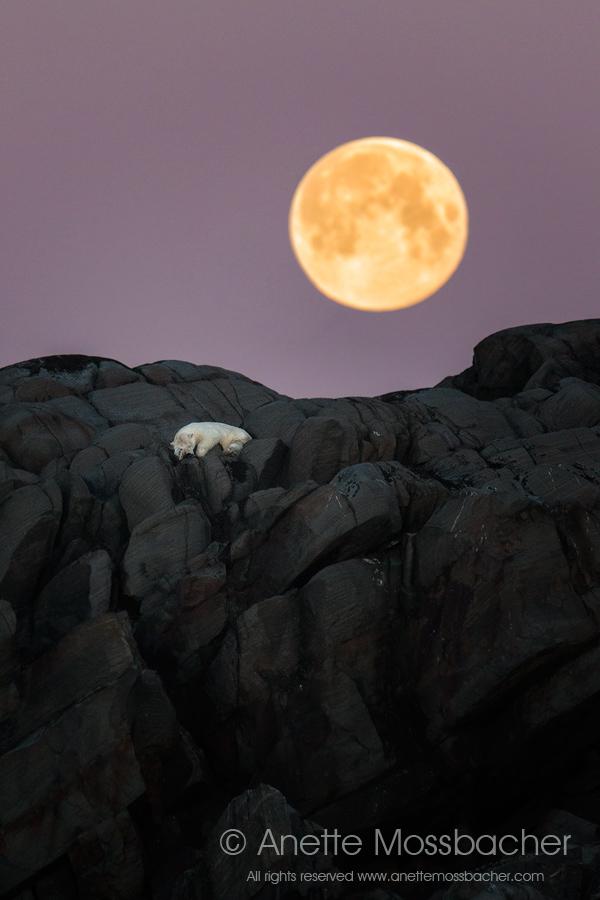 Good night sleep tight!