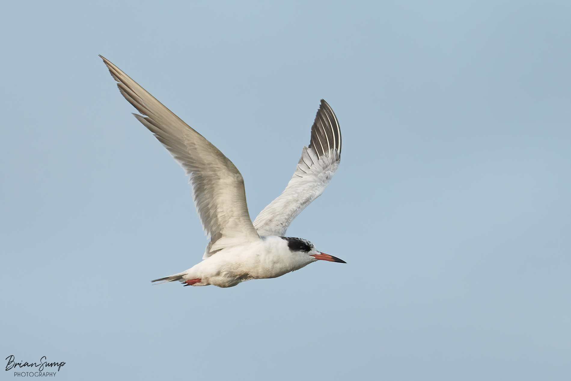 Name:  2020-05-14-Fosters-Tern-Brian-Sump_6475-SIG-FORUM.jpg