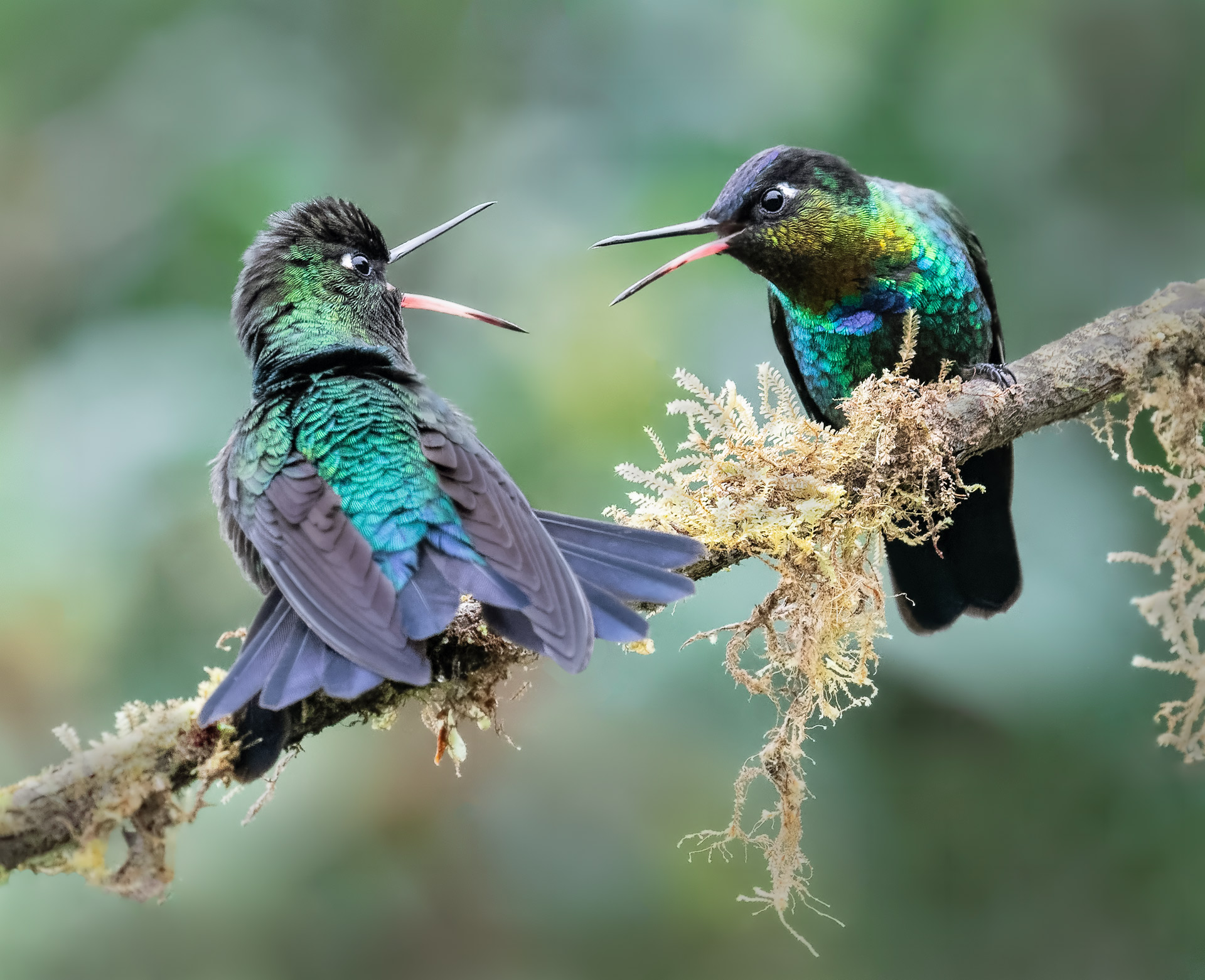 Name:  Danger-gummy-birds-4a-copy.jpg Views: 378 Size:  593.0 KB