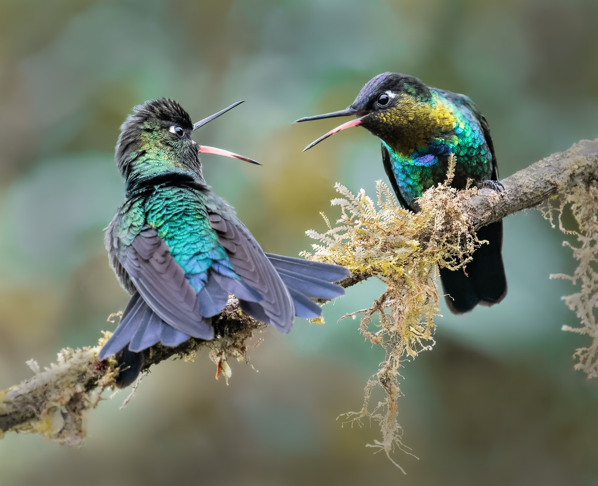 Name:  Danger-gummy-birds-4d-copy.jpg Views: 338 Size:  597.1 KB