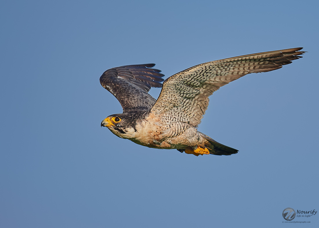 Name:  190711_202_Falcon 1.jpg