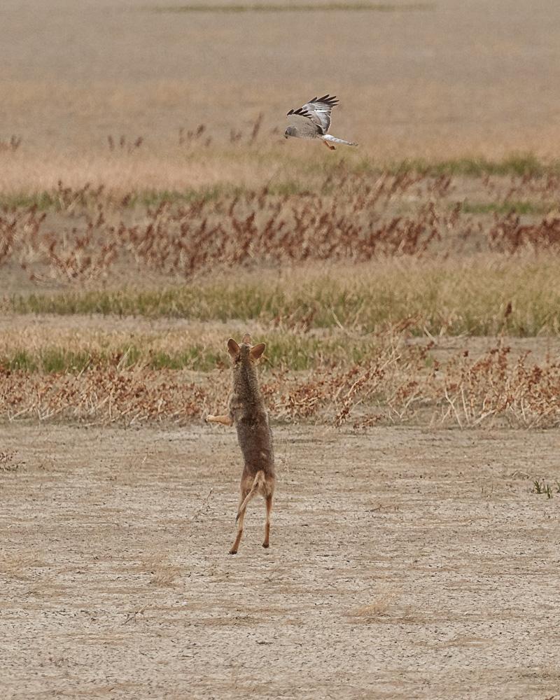 Name:  Coyote-7.jpg Views: 39 Size:  355.5 KB