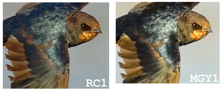 Name:  RCMGY1.jpg Views: 307 Size:  108.6 KB