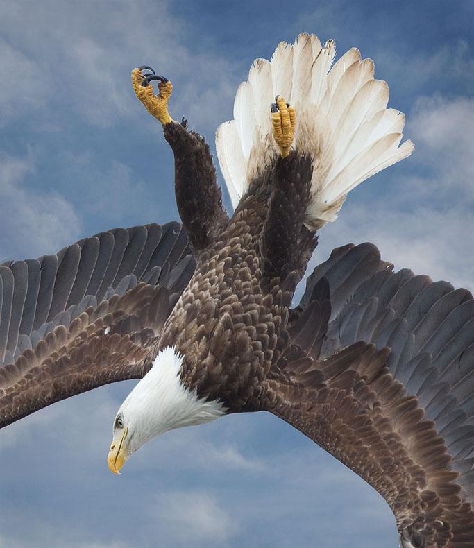 Name:  eagle A_1B.jpg Views: 416 Size:  135.9 KB