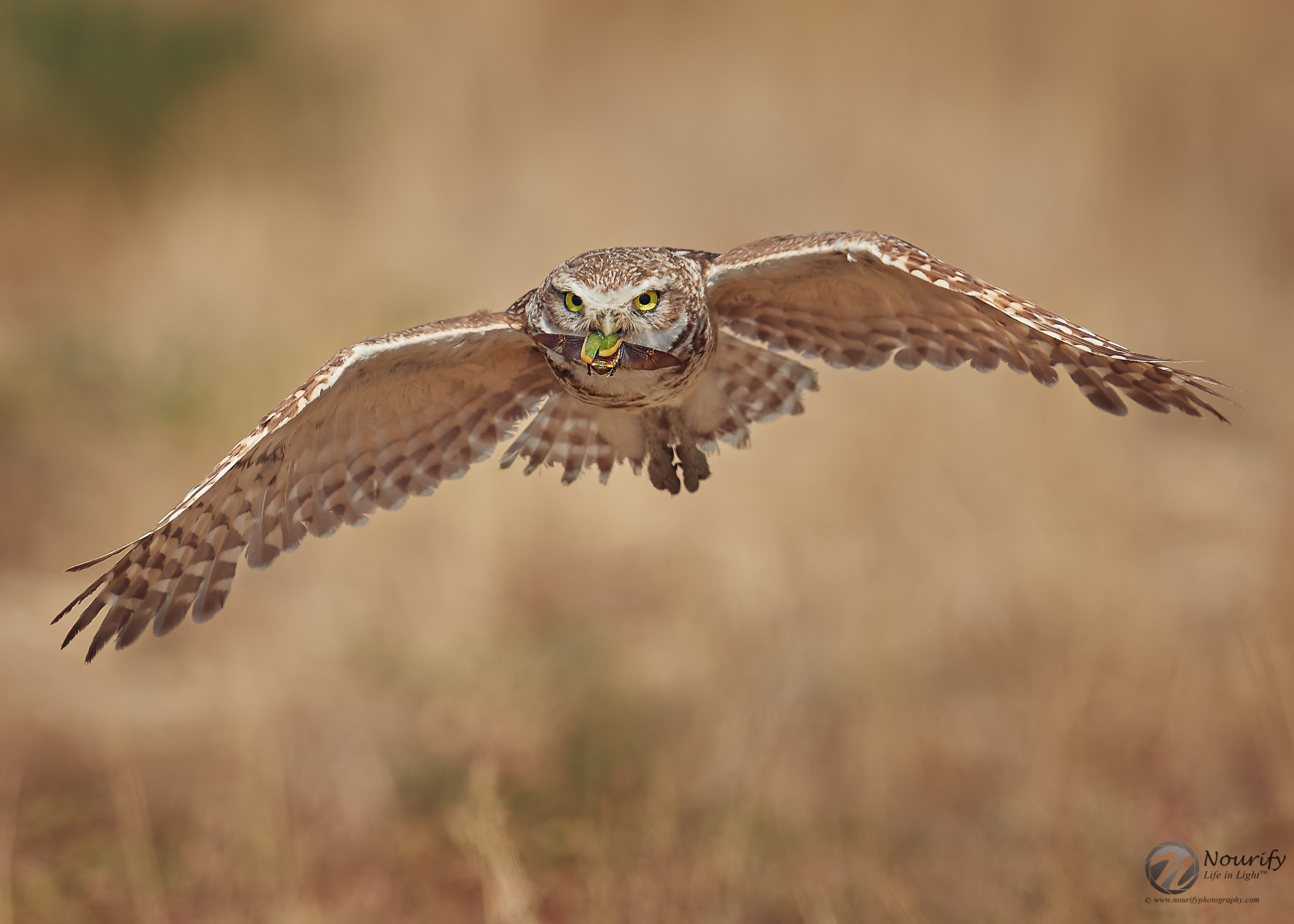 Name:  190713_691_Owls 1-2.jpg Views: 104 Size:  214.8 KB