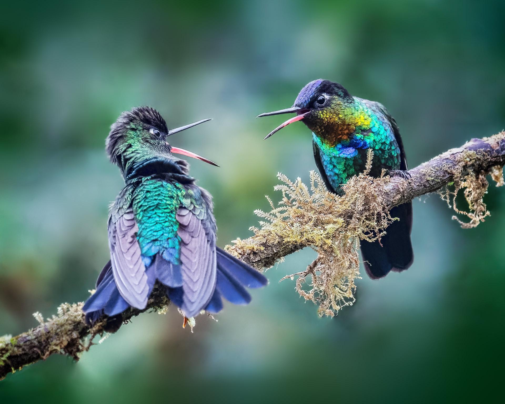 Name:  Danger-gummy-birds-2a-Edit-copy-BP.jpg Views: 426 Size:  564.0 KB