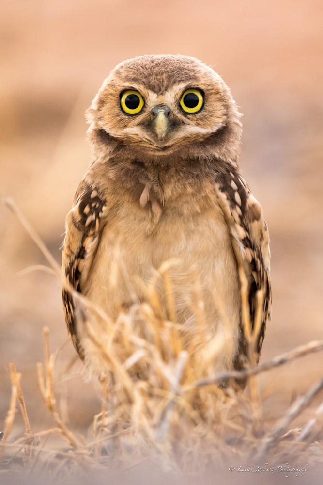Name:  Intro Owl.jpg Views: 79 Size:  282.2 KB