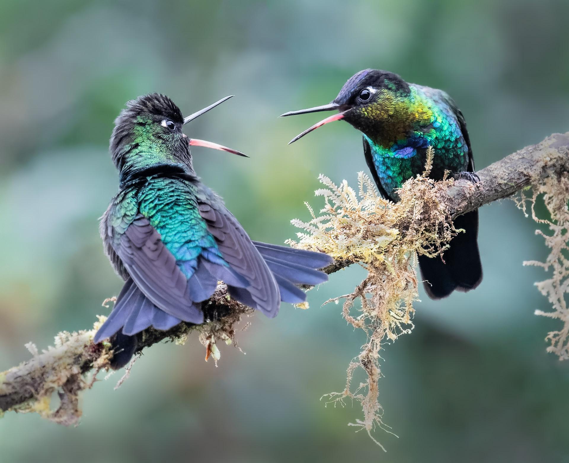 Name:  Danger-gummy-birds-4-copy-AH.jpg Views: 191 Size:  591.1 KB