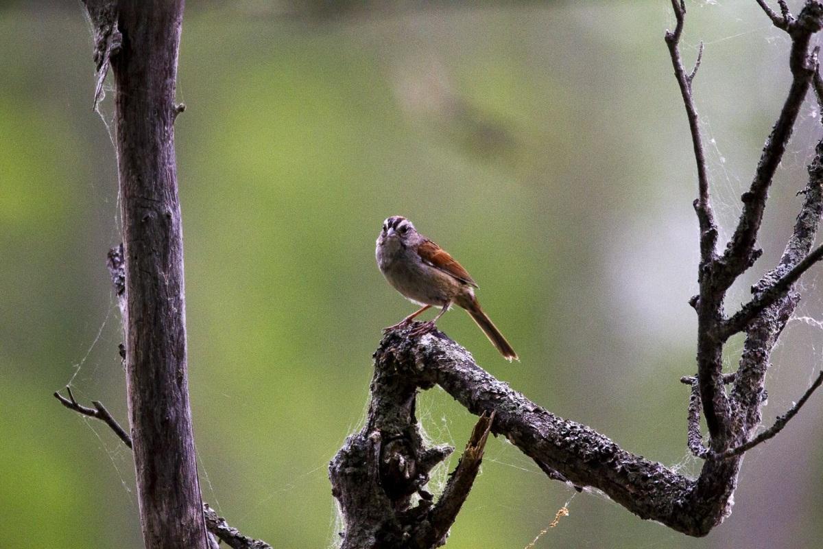 Name:  warbler-1.jpg Views: 80 Size:  377.9 KB