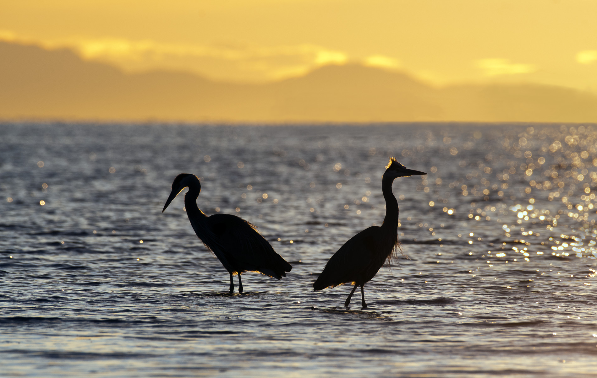 Name:  Two Herons - For Forum.jpg Views: 67 Size:  468.7 KB