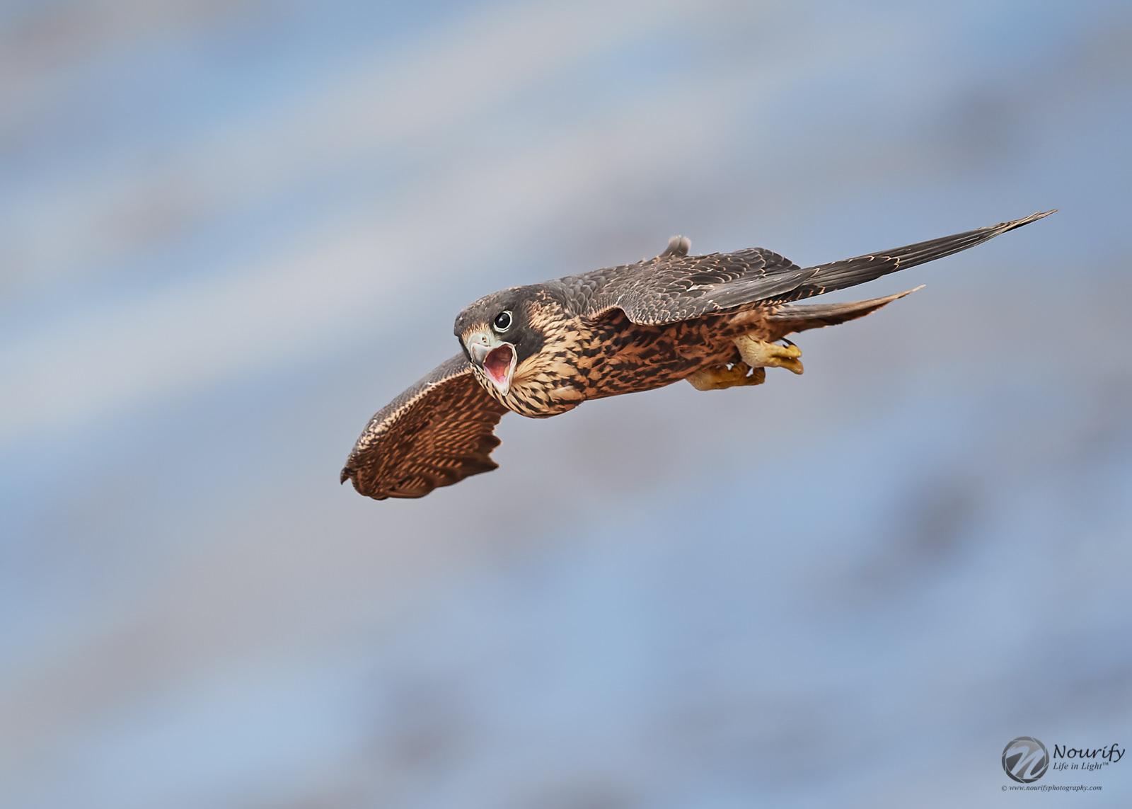 Name:  190819_126_Falcons 1.jpg Views: 151 Size:  219.2 KB