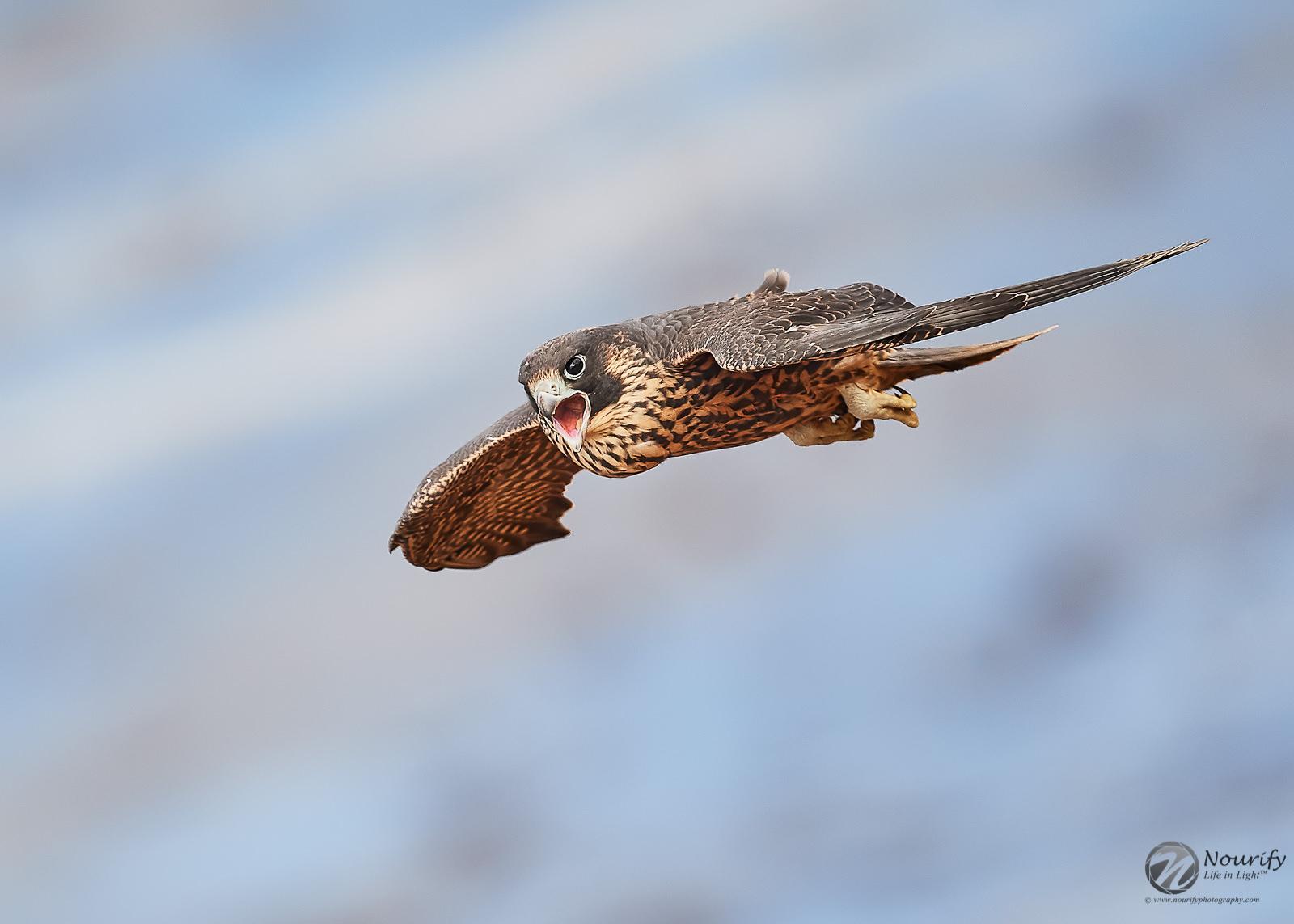 Name:  190819_126_Falcons 2.jpg Views: 73 Size:  291.3 KB