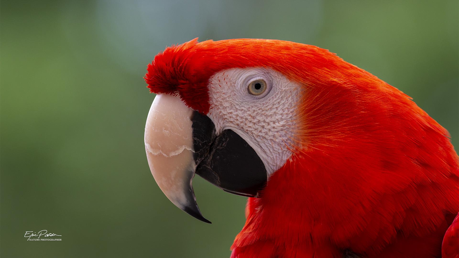 Name:  Macaw_3243.jpg Views: 213 Size:  459.6 KB
