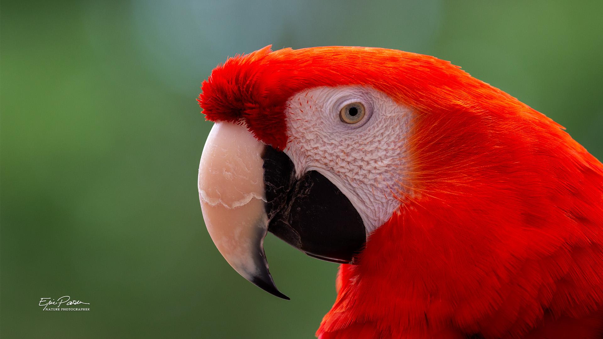 Name:  Macaw_3243 copy.jpg Views: 183 Size:  507.9 KB
