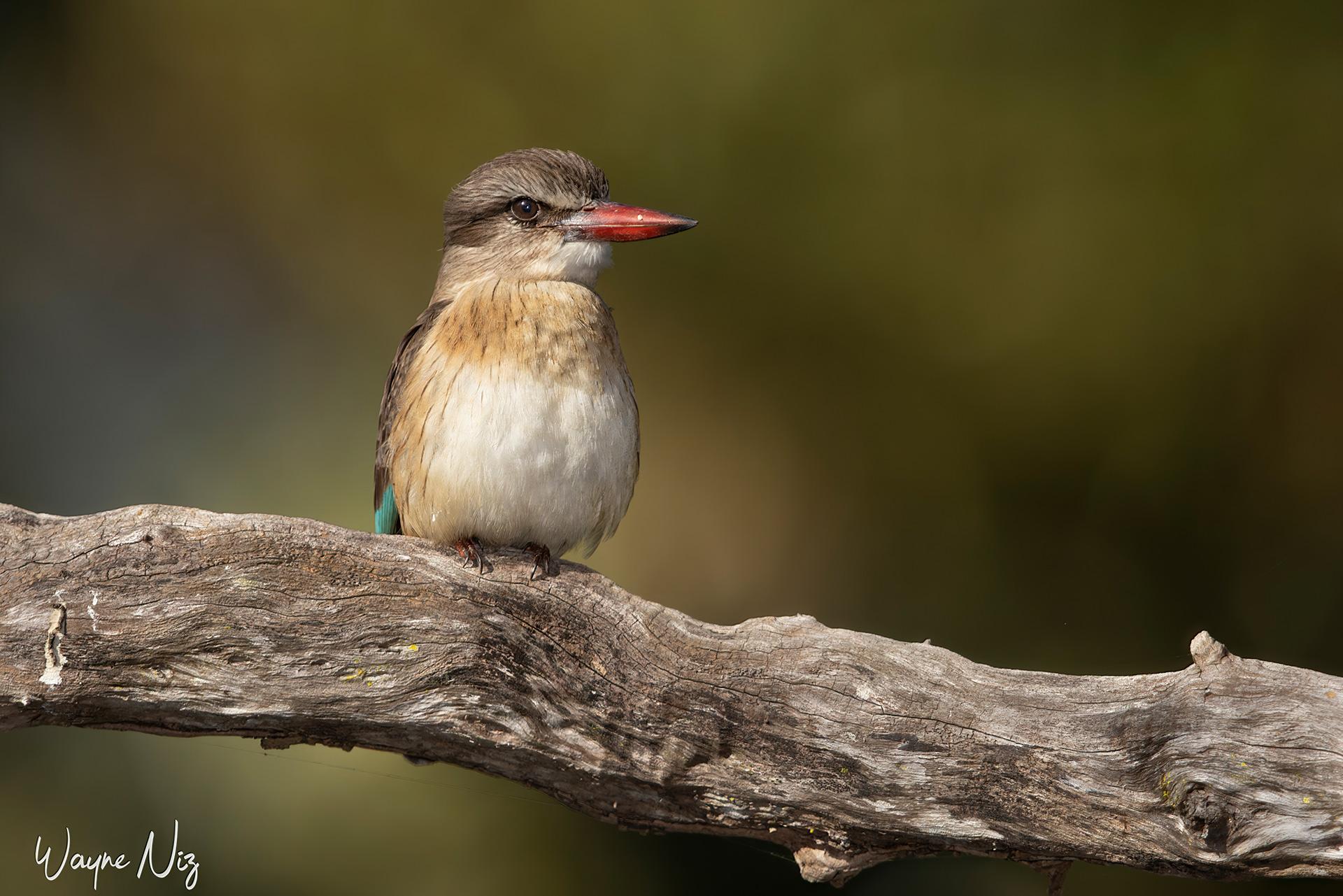 Name:  Kingfisher Small.jpg Views: 98 Size:  587.4 KB