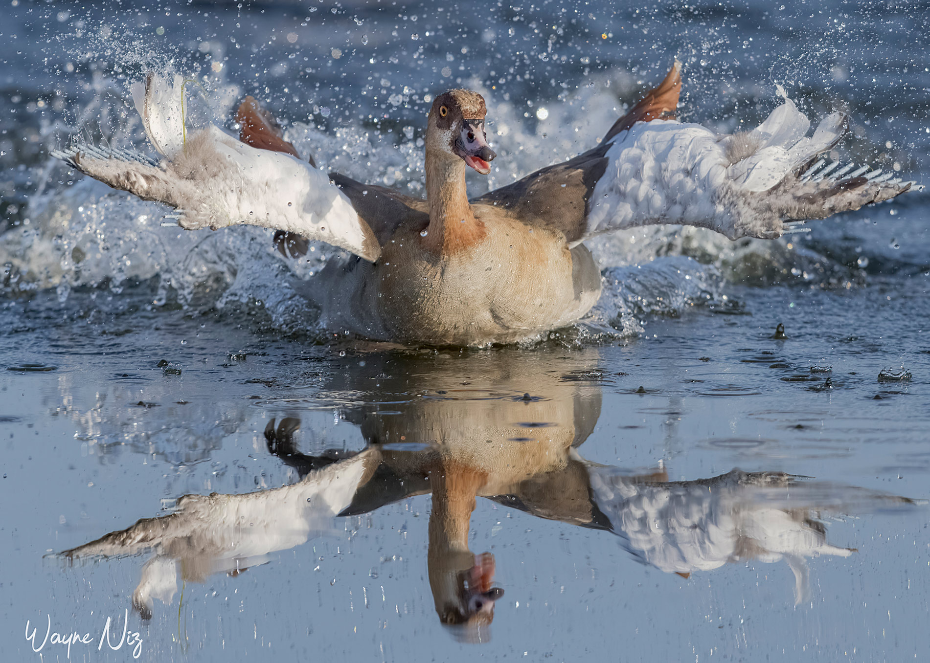 Name:  Goose Water Small.jpg Views: 95 Size:  590.6 KB