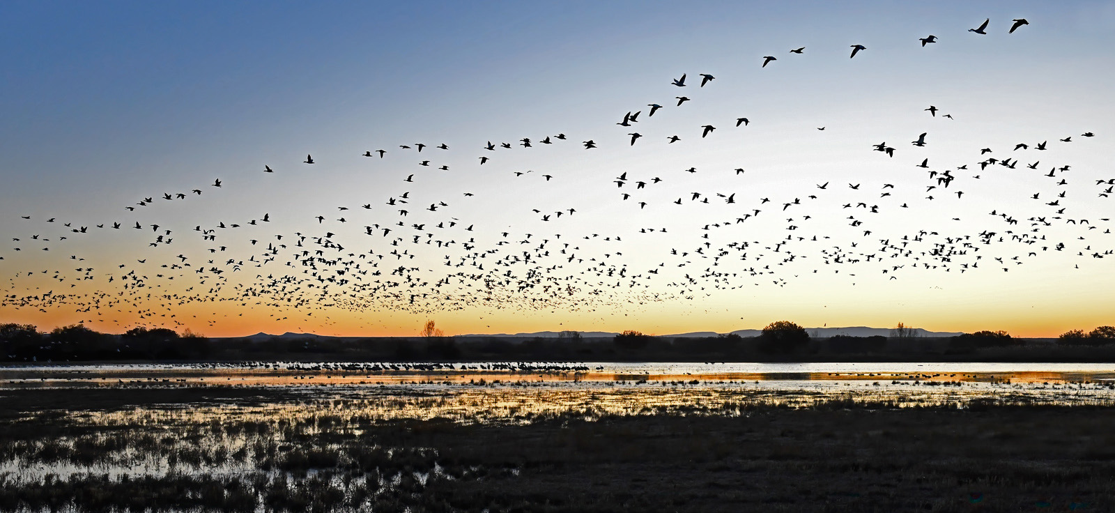 Name:  Snow-Geese-at-Sunrise-R---Bosque-del-Apache-111319-midi1600.jpg