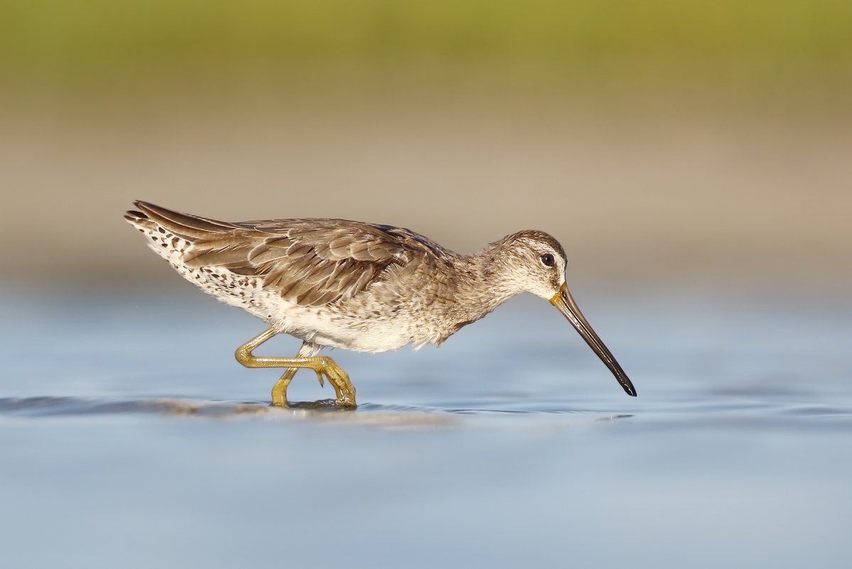 Name:  wader.jpg