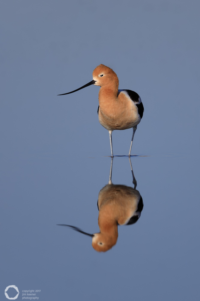 Name:  avocet-reflection-2.jpg Views: 139 Size:  153.5 KB