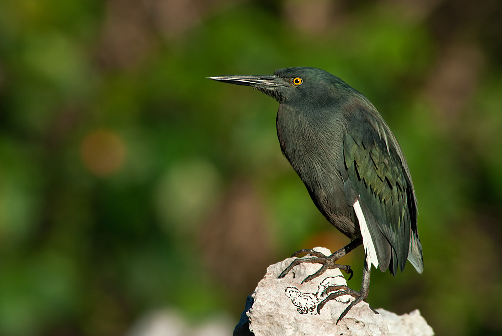Name:  Heron_3086.jpg Views: 454 Size:  191.7 KB